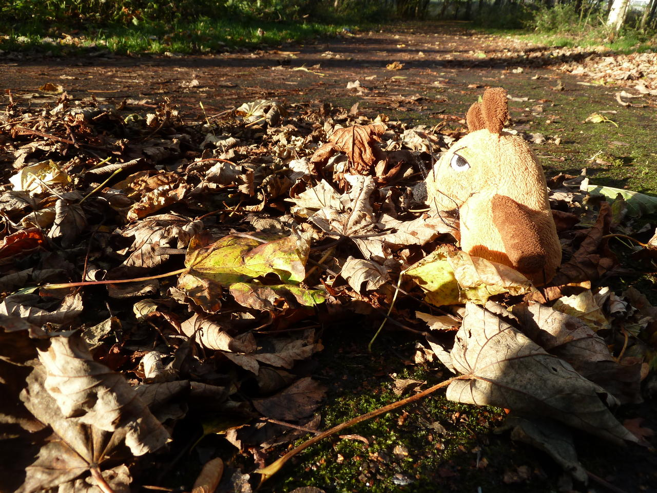 Mouse (a soft toy mouse) looking at leaves on a path