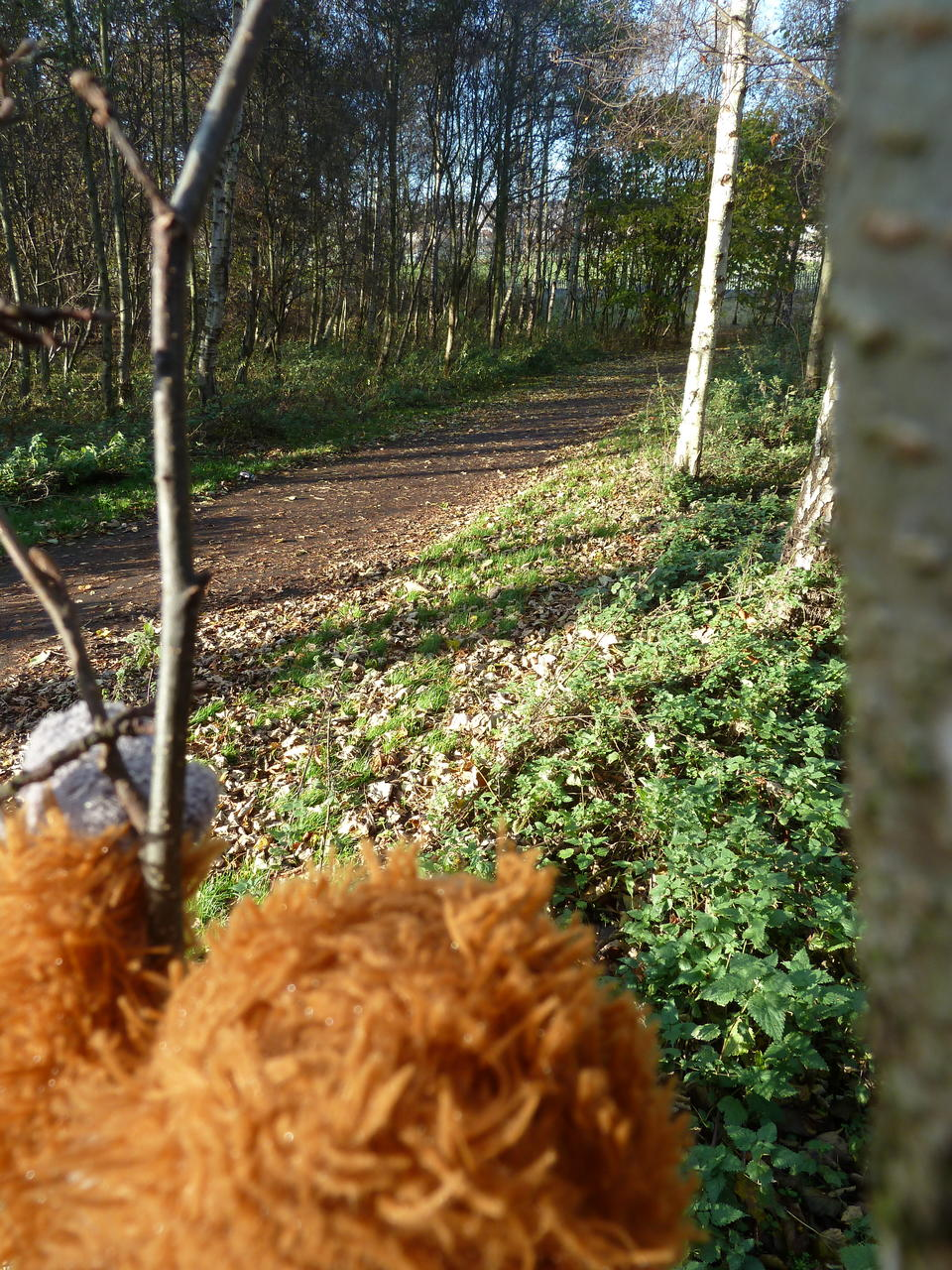 View of the path from the tree, Pongo's head in the foreground