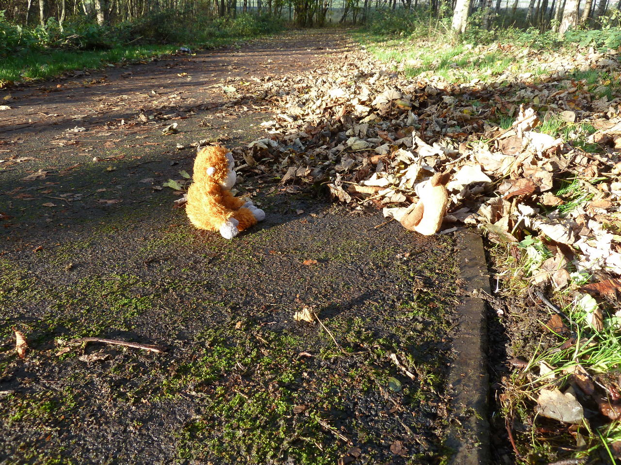 Pongo and Mouse sitting on the path, which is partly cleaned from leaves