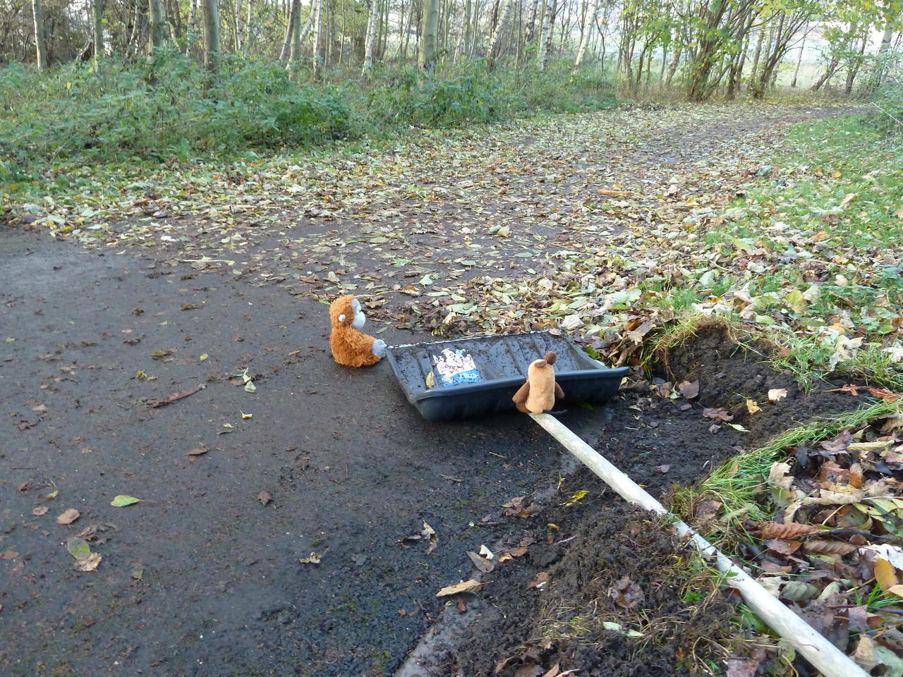 Pongo and Mouse sitting on the path next to the shovel, which is partly cleaned from leaves