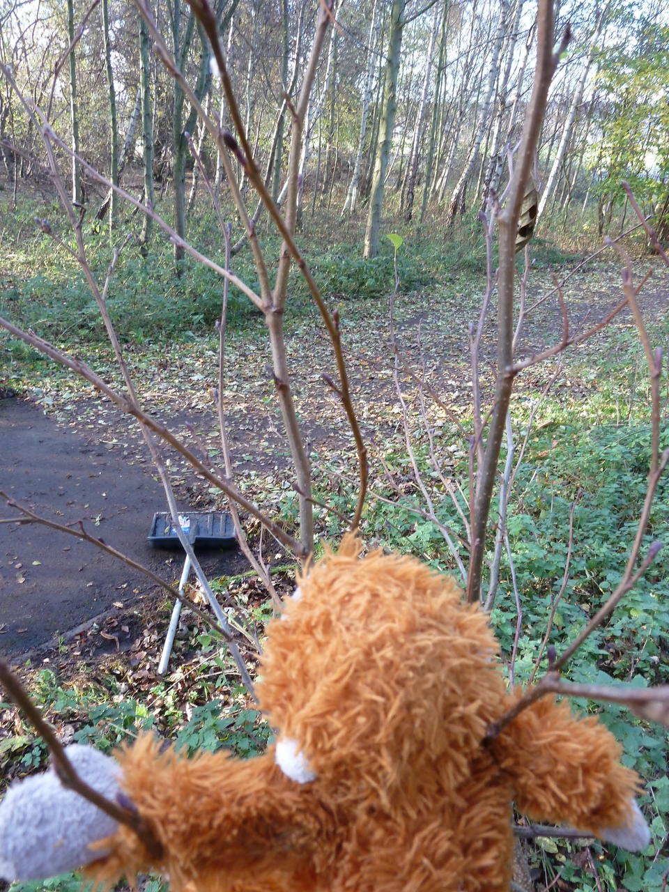 View of the path from the tree; Pongo's head in the foreground