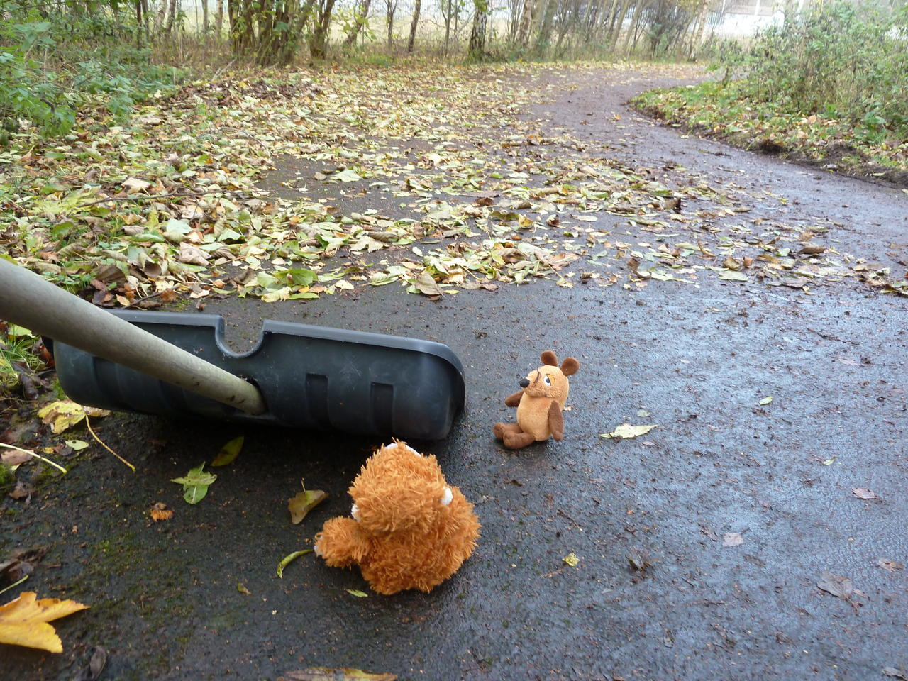 Pongo and Mouse next to the shovel looking forward, where the path is full of leaves