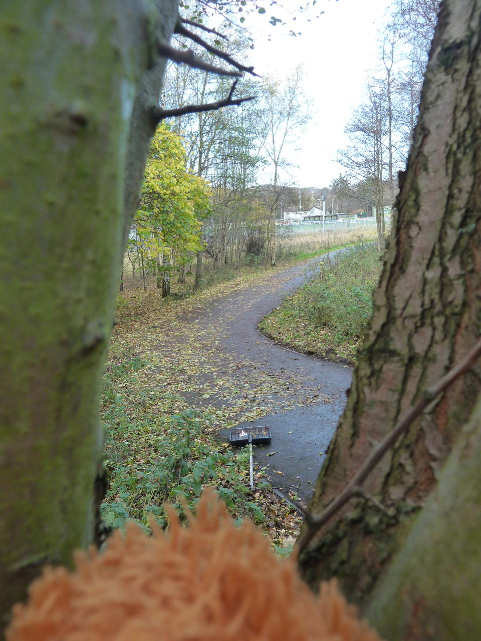 View of the path from the tree. There are only a few metres with leaves left.